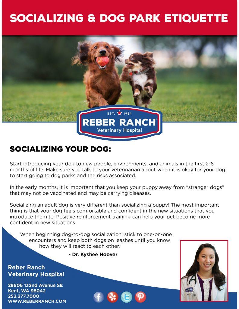 Reber Ranch Dog Park Kent Wa