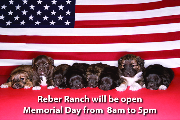 Reber memorial day hours