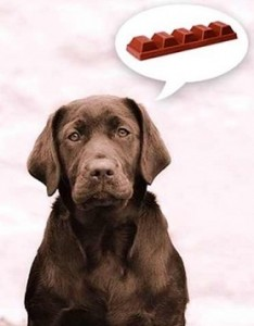 labs and chocolate2