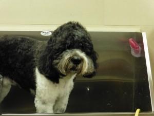 Dog in a grooming bath tub