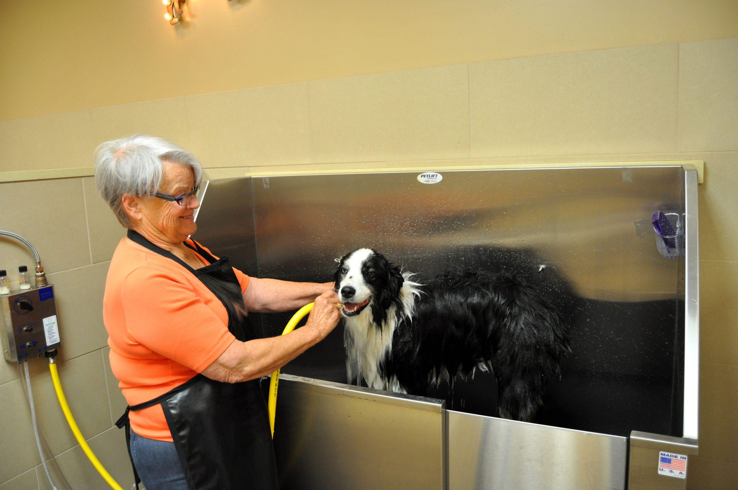 Do It Yourself Dog Wash