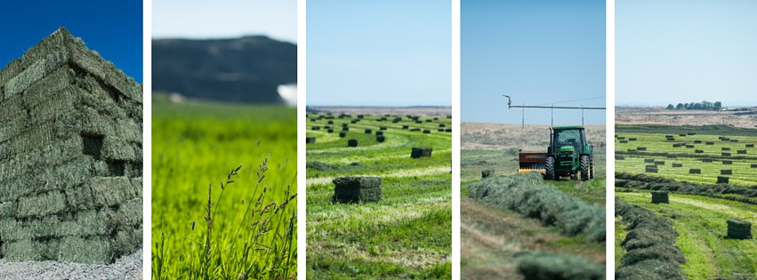 Round Lake Farms