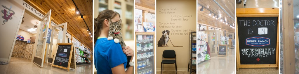Animal Hospital and Veterinarian Services